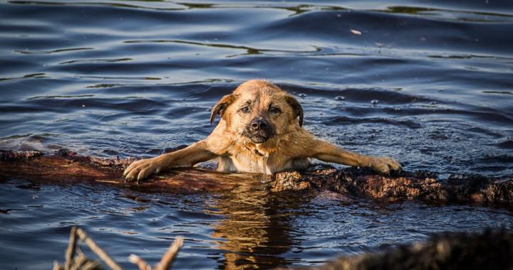 Sommerliche Risiken für Haustiere