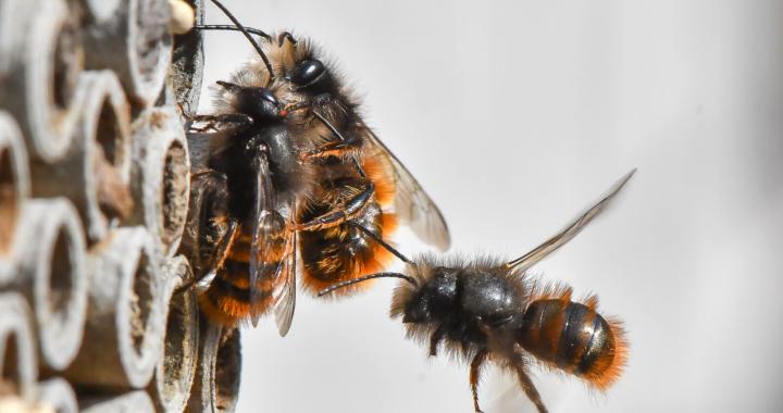 Mit ManoMano gegen das Insektensterben