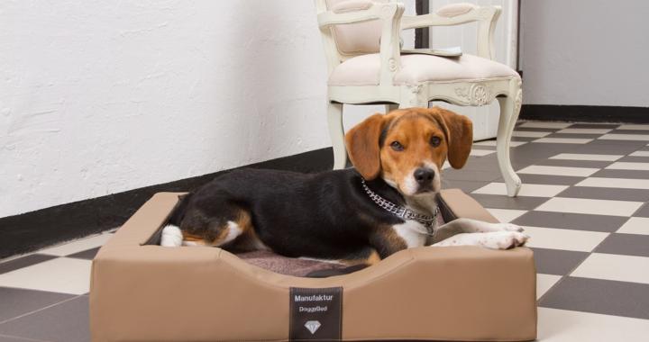 Das DoggyBed – jetzt auch innen belüftet