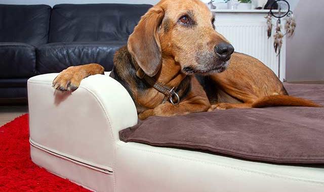 DoggyBed – ein Hundebett zum Wohlfühlen
