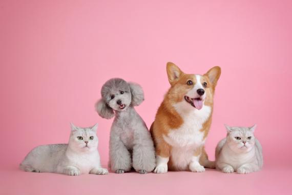 Anschaffung sowie Haltung von Hunden und Katzen