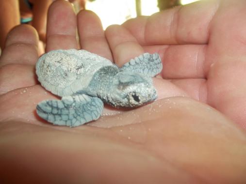 SeavisTours unterstützt die Schildkrötenaufzuchtstation auf Saona