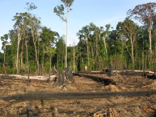 Entwaldung gefährdet weltweit Klima und Umwelt