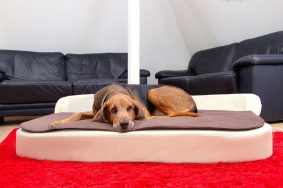 Gesunde Hundekissen für S-XXL Hunde