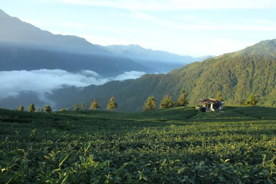 Formosa Tee – Die Geschmacksvielfalt Taiwans erleben