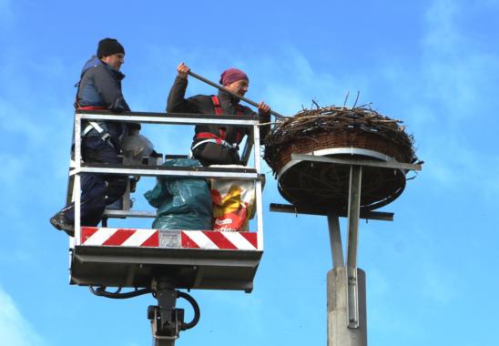 Naturschutz bei E.DIS: Storchennest auf altem Strommast