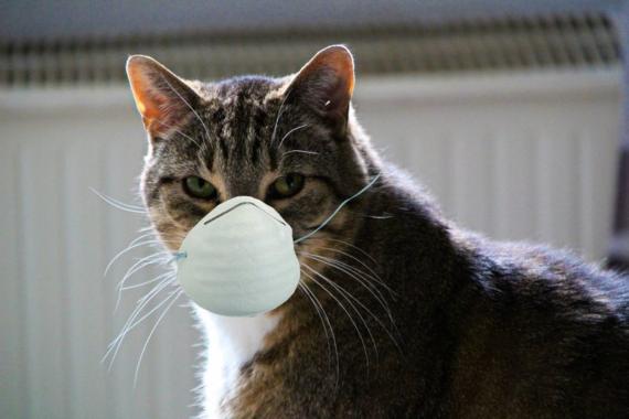 Vorsichtige Öffnung der BDT-Tierherberge Kamp-Lintfort in der Corona-Krise