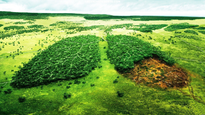 Trillion Trees Initiative and Species Protection Program