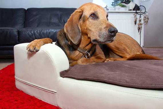 XXL-Hundebetten für Hunde bis 100kg