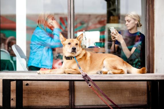 Werksverkauf: Persönliche Beratung beim Hundebett-Hersteller