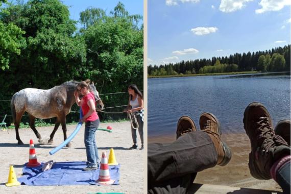 Das Fichtelgebirge ruft: Familienharmonie durch Pferdecoaching