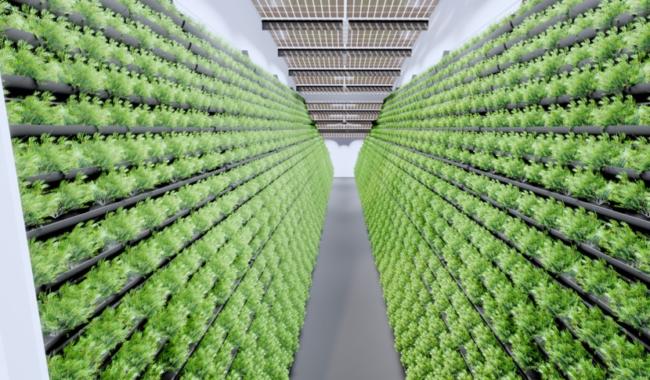 MABEWO AG: zukunftsweisendes In-Door-Farming mit Nachhaltigkeit