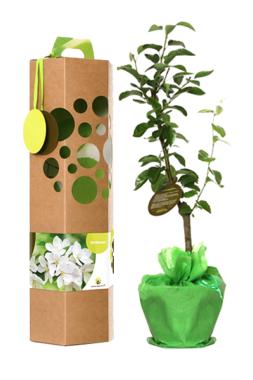 Geschenkbäume, eine alte Tradition trendy präsentiert.
