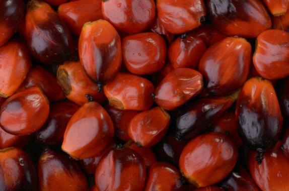 Palmöl von zertifizierten Anbauplantagen