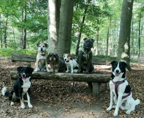 Ein naturbelassener Garten bietet Tieren Lebensraum