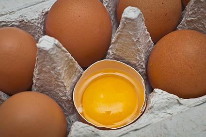 Bewertung von Eierkartons aus Kunststoff und Pappe