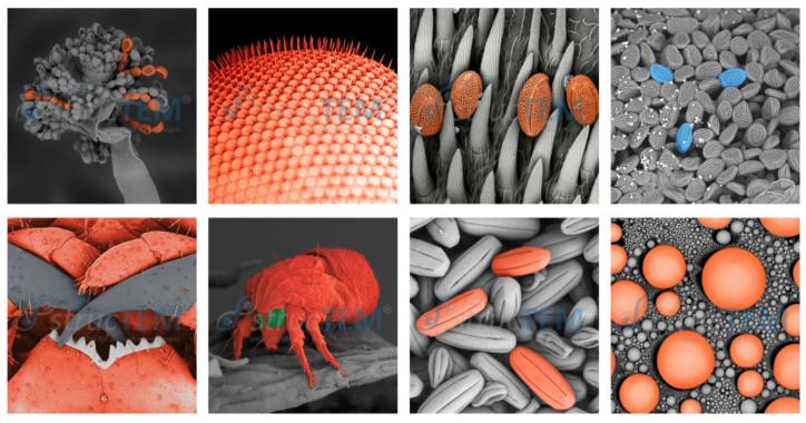 Online und interaktiv die Mikrowelt entdecken