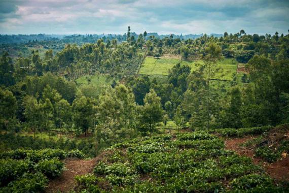 Nachhaltiges Weihnachten: GEZE pflanzt einen globalen Unternehmenswald