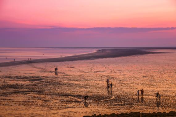 Zwischen Ebbe und Flut: Nationalpark – Niedersächsisches Wattenmeer