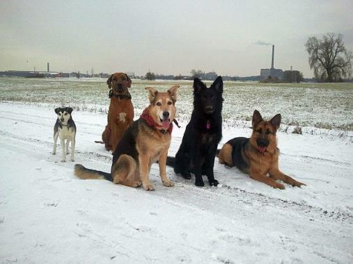 So kommen Hund, Katze & Co durch den Extrem-Winter