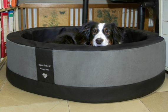 Der ideale Hundekorb für meinen Hund!
